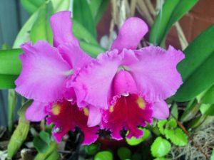 orquideas caseiras