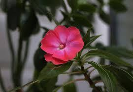 planta florescendo