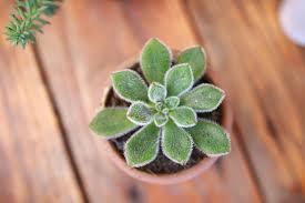 planta na mesa